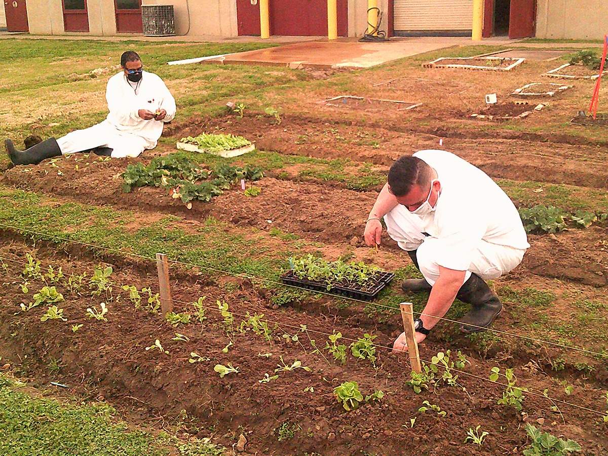 Windham School District (WSD) established an Urban Farming program to teach students the necessary skills to obtain future employment and meet increasing demands